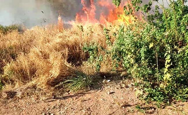 Incêndio atinge as proximidades da UFCA, em Juazeiro do Norte
